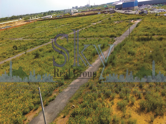 plots on nh8